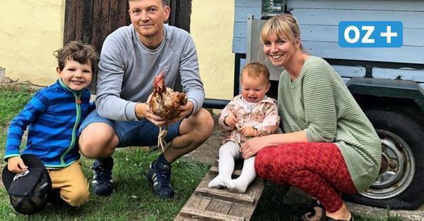 Rettet das Huhn auf Rügen: Legehennen in Not finden neues Heim