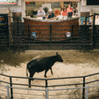 'The worst thing I can ever remember': How drought is crushing ranchers