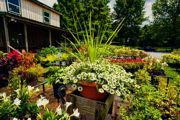 Corbin Creek Greenhouse wholesale orders with 50% down to ensure availability by fall!