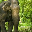 Sri Lanka banned riding elephants under the influence for the sake of the animals' welfare