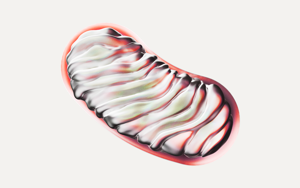 Researchers Draw New Connections Between Aging and Mitochondrial Health