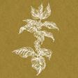 Coffee Basics: What Is Laurina Coffee?