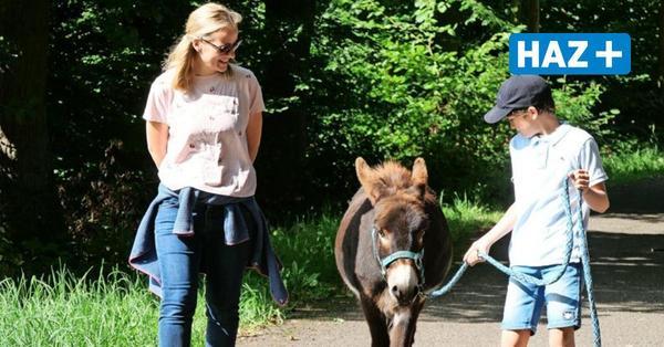 Stur? Von wegen! Tiertrainerin lädt zu Wanderungen mit Eseln ein