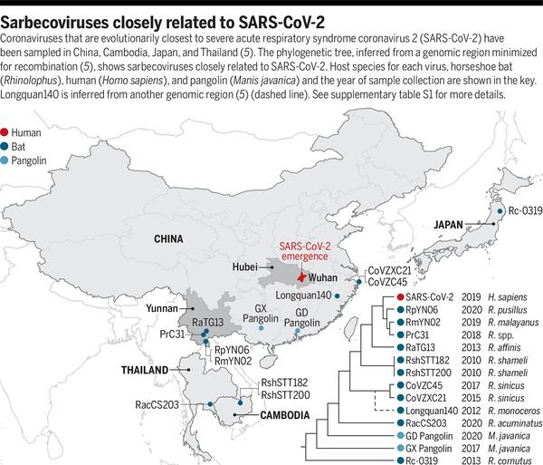 The animal origin of SARS-CoV-2   Science