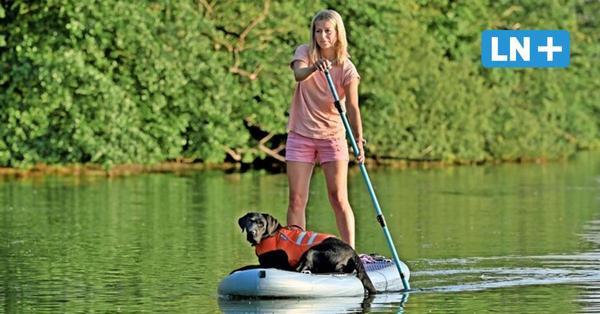 Tierische Seefahrt: SUP-Kurse für Mensch und Hund in Ostholstein