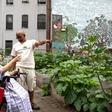 Fundraiser for Harlem Grown by Brandon Stanton : Let's Fulfill Grandma's Promise