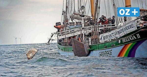 """Greenpeace feiert 50. Geburtstag in Stralsund: """"16 Jahre Merkel waren verpasste Chance"""""""
