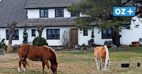 Historisch! Stralsund verkauft Grundstücke auf Ostsee-Insel Hiddensee