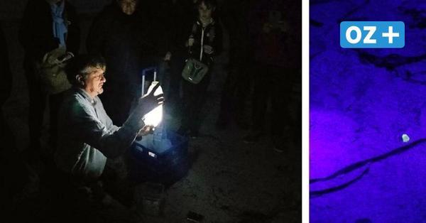 Wenn der Bernstein im UV-Licht leuchtet: Nachtwanderung an Boltenhagens Strand
