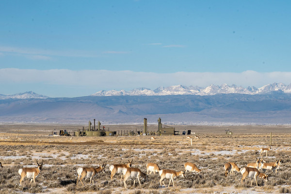 Judge's order forces Interior Department to revive drilling lease sales on federal lands and waters