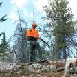 To protect hens with chicks, Washington sets back forest grouse hunting by two weeks