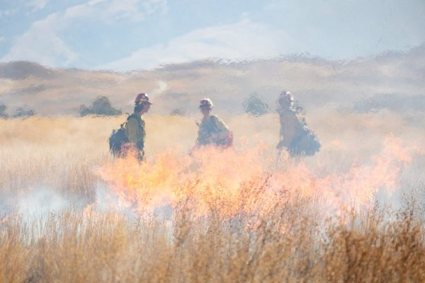 Can 'active forest management' really reduce wildfire risk?