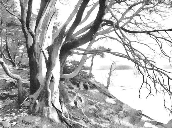 """""""Smoky Greys"""" by Terrill Welch, multi media digital sketch"""