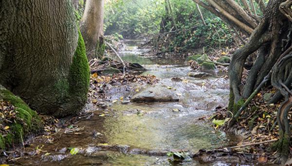 Gestion de l'eau: décider malgré les incertitudes