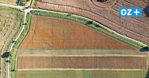 Rügen: Frust bei Öko-Landwirten über Flächenvergabe durch das Land
