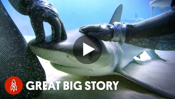 """How One Diver Became the """"Mother of Sharks"""""""