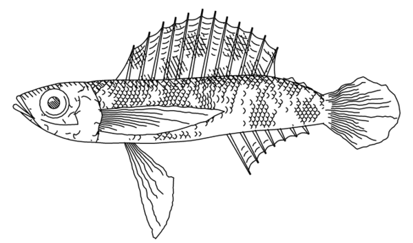 fishdraw