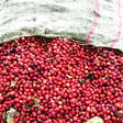 COVID Lockdowns Stymie Vietnamese Robusta Exports