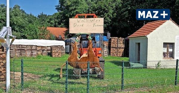 Drastische Aktion nach Wolfsangriff: Landwirt in Stücken hängt totes Rind im Ort auf
