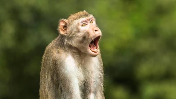 """""""Comedy Wildlife Photography Awards"""": Das sind die lustigsten Tierfotos des Jahres"""