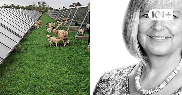 Kommentar von Silke Rönnau - Bürokratie bremst Klimaprojekte aus