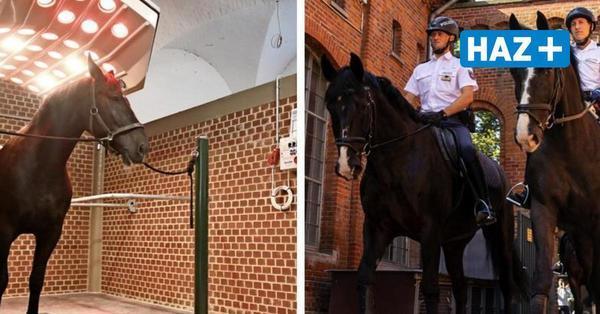 Reiterstaffel der Polizei kehrt nach Hannover zurück – samt neuem Pferdesolarium