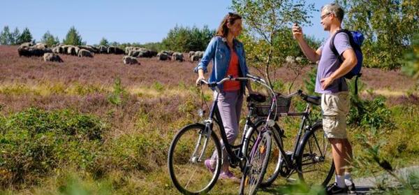 Mit etwas Glück trifft man unterwegs auf Heidschnucken - hier in der Großen Heide bei Oberohe. (Foto: www.lueneburger-heide.de)