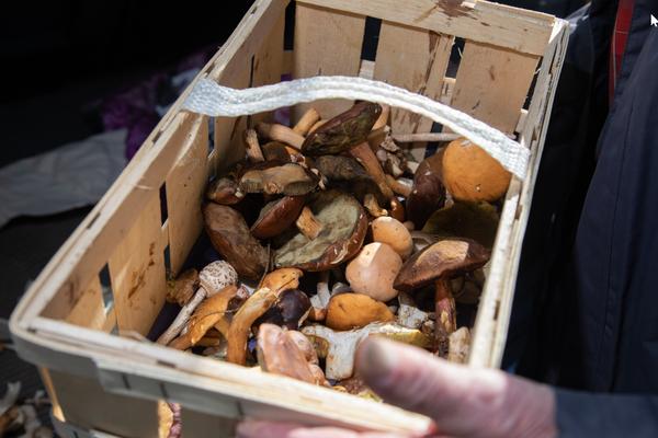 Die Grundvoraussetzungen für ein Pilzgericht sind geschaffen. (Foto: Tim Schaarschmidt)