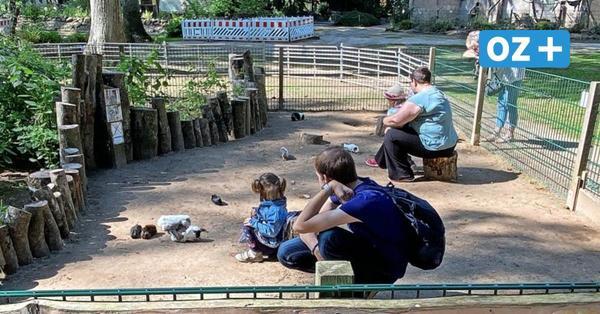 Alleinerziehende Mutter kritisiert Preispolitik des Wolgaster Tierparks