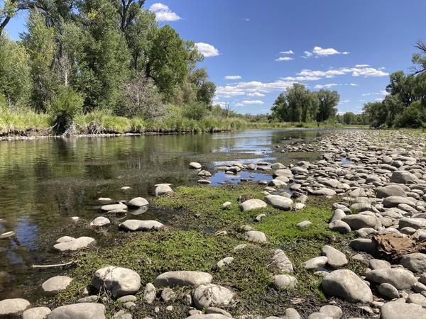 Prized trout streams shrink as heat, drought grip the West