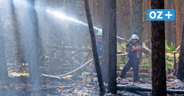 Waldbrände: So gut sind Vorpommern-Rügen und Stralsund vorbereitet