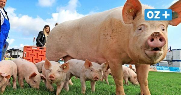 Programm, Corona-Regeln, Tierschau, Essen: Was Sie zur Mela 2021 wissen müssen