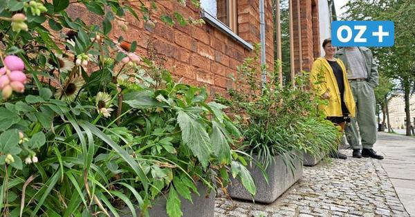 Wismarer Altstadt-Bewohner machen sich für Blumenkübel vor Häusern stark