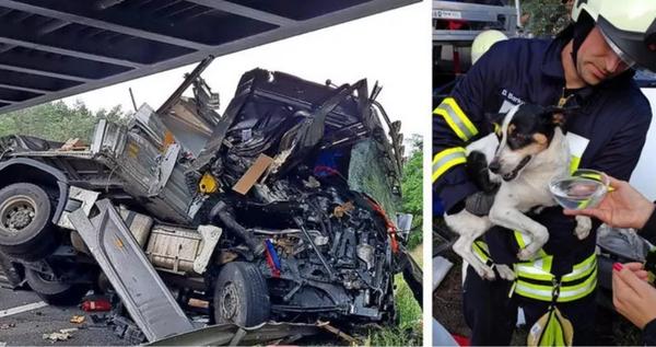 Der Unfall-Truck und Hündin Tinky. Fotos: Julian Stähle, Robin Rieck, A+W Autoservice