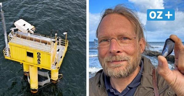 Neue Aquakulturen in der Ostsee: Wie Miesmuscheln die Fischer in MV retten sollen