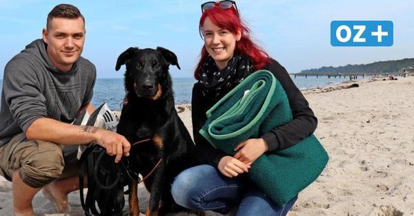 Rerik prüft Kurabgabe für Hunde: Das halten Tierbesitzer von der Idee