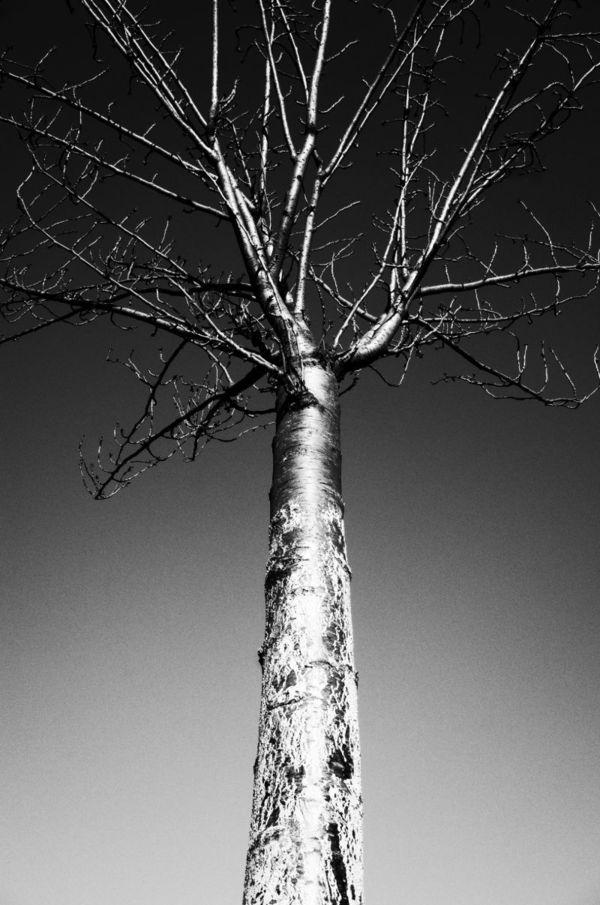 """""""Cosmic Tree"""", 2021 — auction via OpenSea"""