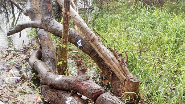 Now, NGO writes to BMC, opposes cycle track at Powai lake