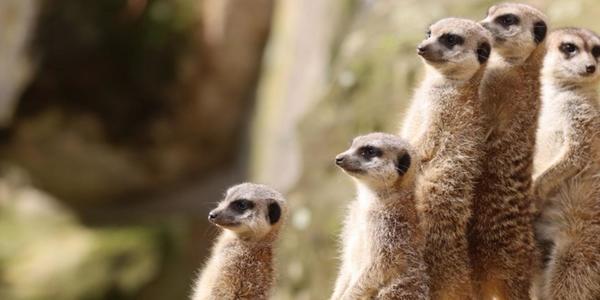 Im Dresdner Zoo gilt wieder die 3G-Regel
