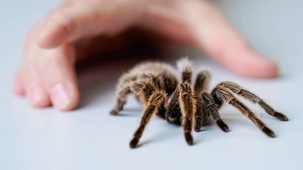 ... die Antwort auf die Fragel warum Erwachsene Angst vor Insekten und Spinnen haben – und Kinder damit spielen