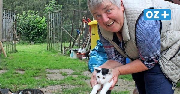 """Satowerin kümmert sich um über 40 Katzen:""""Ich konnte sie nicht töten"""""""