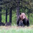 A fed bear