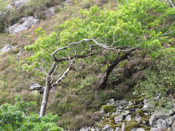 Can you guess where the prevailing wind comes from?!