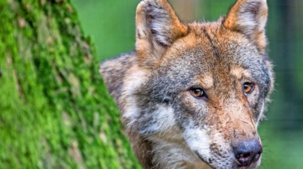 Die Wildtiere wagen sich immer näher an Siedlungen heran. Foto: dpa