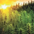 Will Idaho be among the next group of states to legalize recreational cannabis?