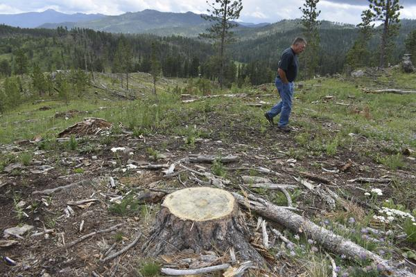 Climate change, logging collide—and a forest shrinks