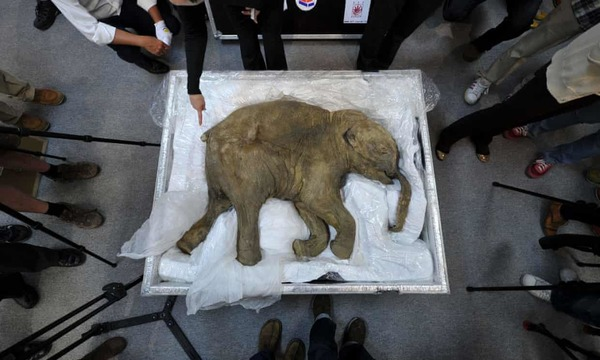 Firm raises $15m to bring back woolly mammoth from extinction