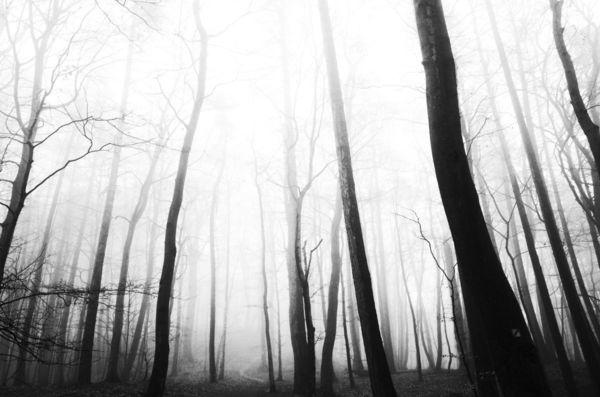 Dark Forest, 2019