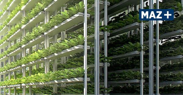 Bienenfarm: Gemüseanbau in Trockengebieten wird bald einfacher