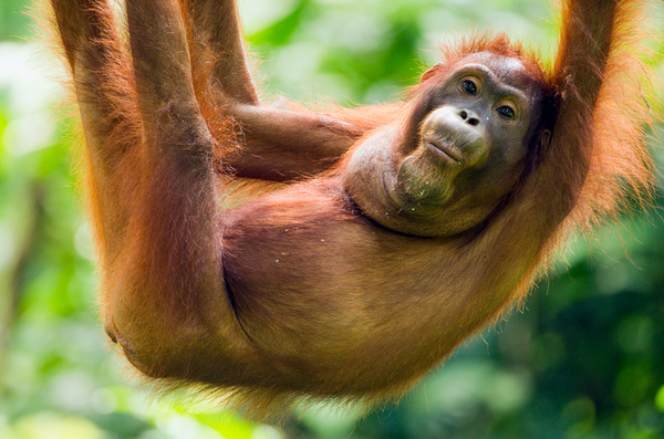 'Jumping gene' may have erased tails in humans and other apes—and boosted our risk of birth defects | Science | AAAS
